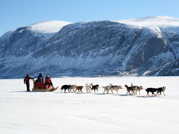 steger-sled-dogs_11088_600x450