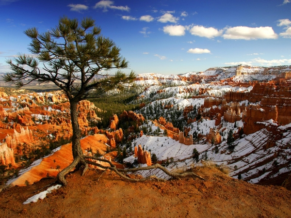 Alone on the Rim, Bryce Canyon National Park, Utah pictures