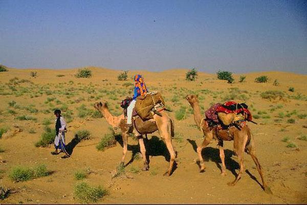 Camel_Caravan-Jaisalmer