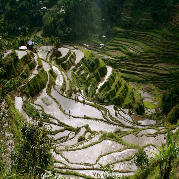 banaue-rice-terraces