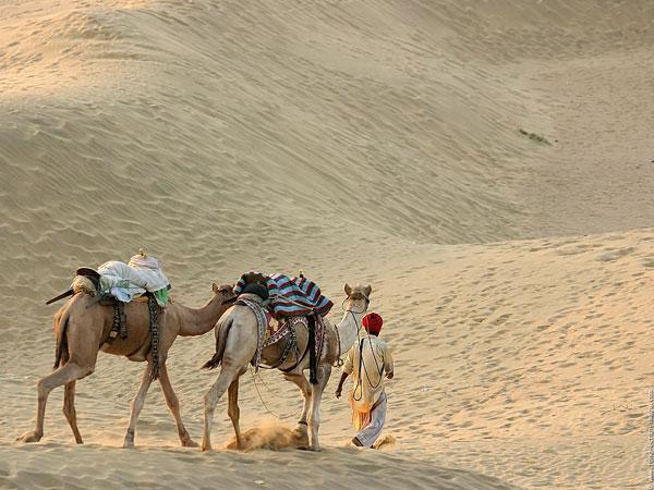 jaisalmer-camel-safari