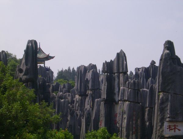 Stone Forest (4)
