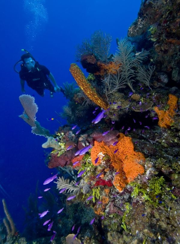 belize reef
