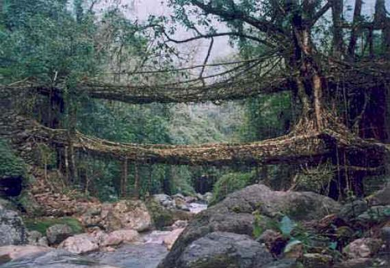 root-bridges-cherrapungee.2233.large_slideshow