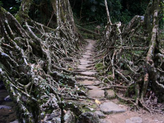 root-bridges-cherrapungee.2236.large_slideshow