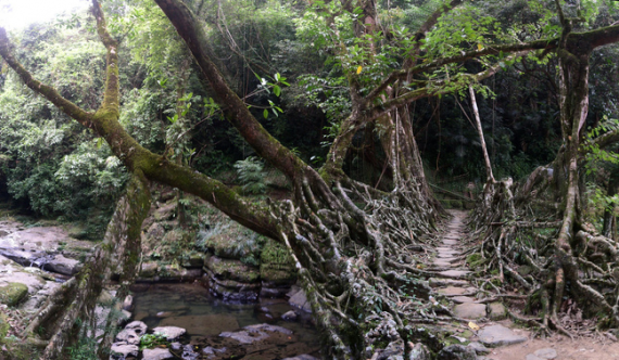 root-bridges-cherrapungee.2238.large_slideshow