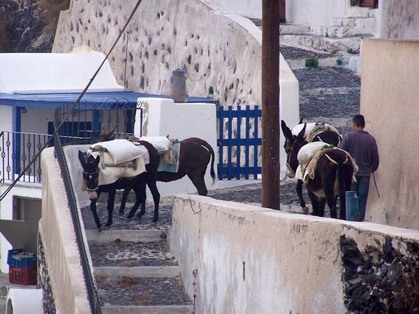 799px-Donkey