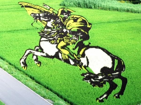 napoleon_of_rice_field_art