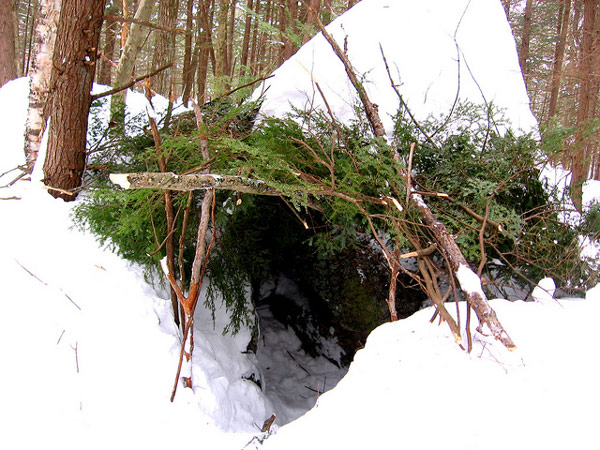 forest shelter winter