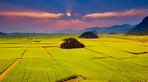 Canola Flower Fields China travel