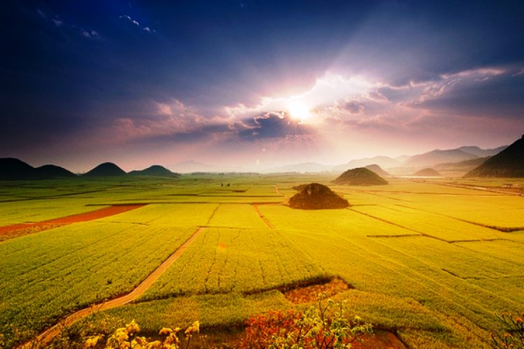amazing-Canola-Flower-Fields-China