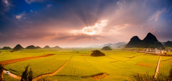 backpacking Canola Flower Fields China
