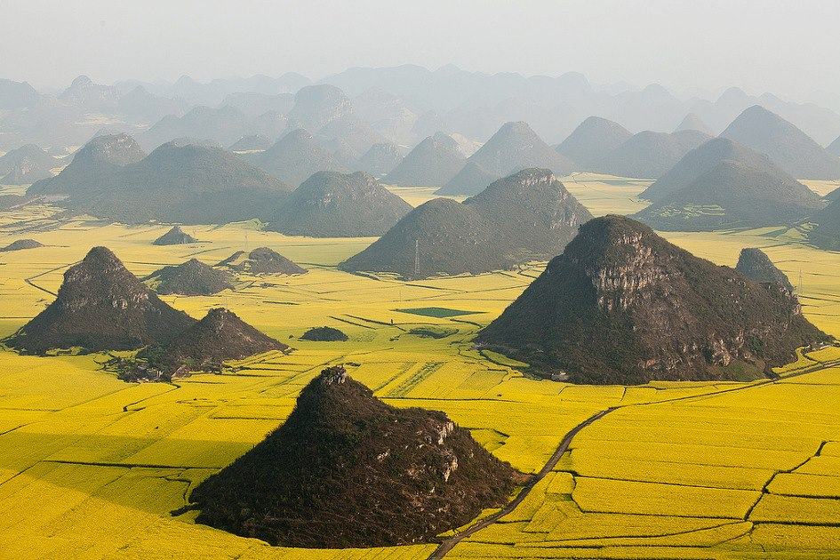 travel canola flower fields luoping china
