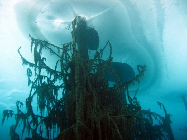 incredible sunken forest (5)