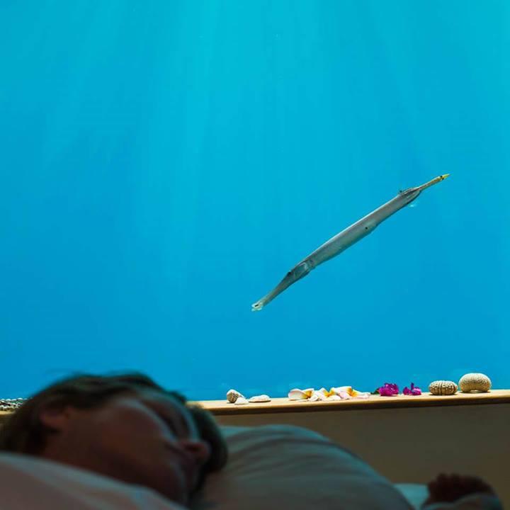 underwater room Manta resort
