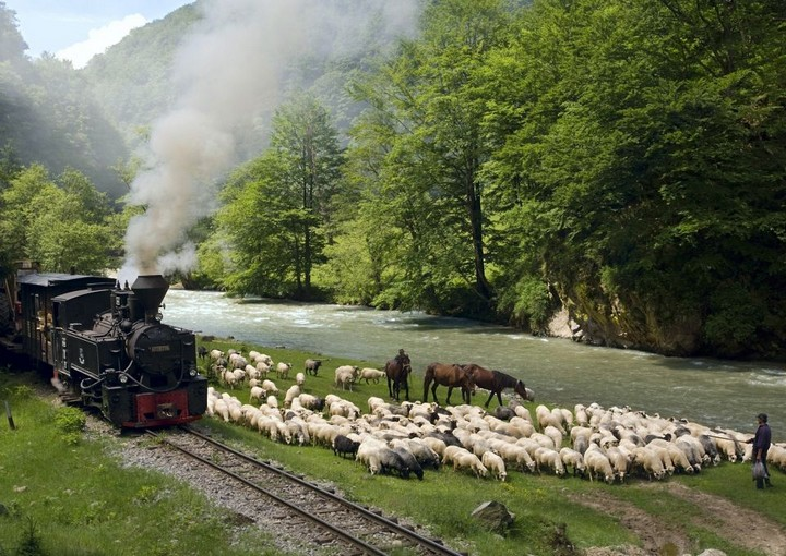 old train in Maramures