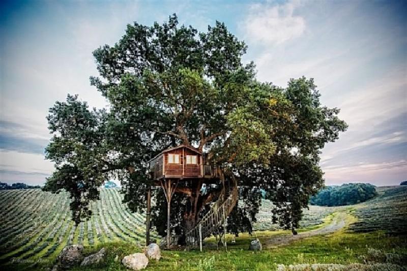 tree house (2)