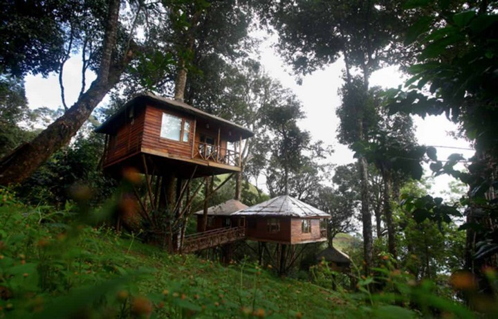 nature-zone-treehouse-munnar-kerala