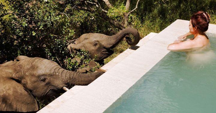 royal malewane elephants