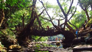 Living Root Bridge Mawlynnong