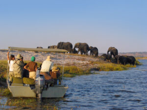 game boat-viewing in Chobe National Park