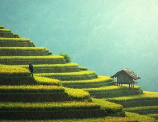 Myanmar rice fields