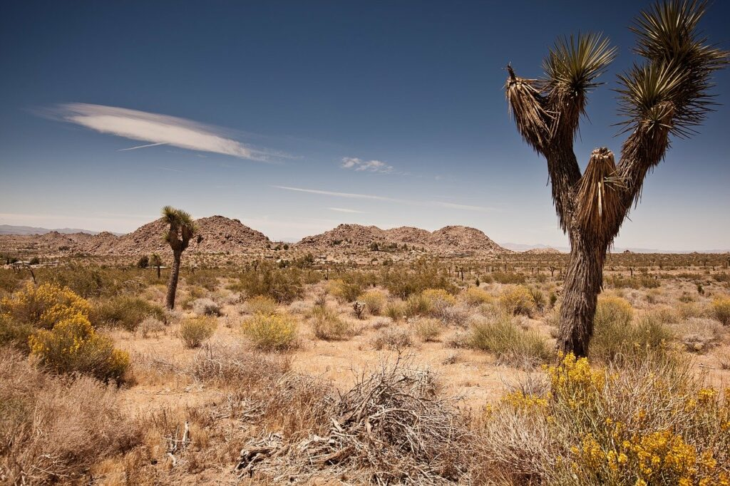 Joshua Tree National Park, image by Mario Schmidt
