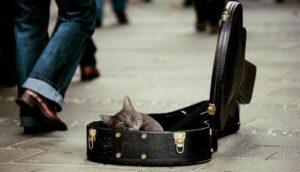 cat in guitar case