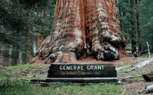 general-Grant-squoia-national-park-usa
