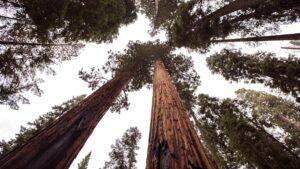 usa sequoia national park